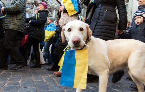 Un perro sostiene la bandera de Ucrania, durante una manifestación contra la guerra en ese país. (Foto: AFP)