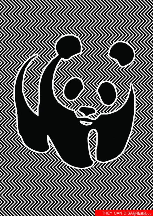Lo que la entidad quiere que la gente comprenda, es que los pandas y otras especies pueden desaparecer si no se tiene el cuidado para convivir con ellos.
