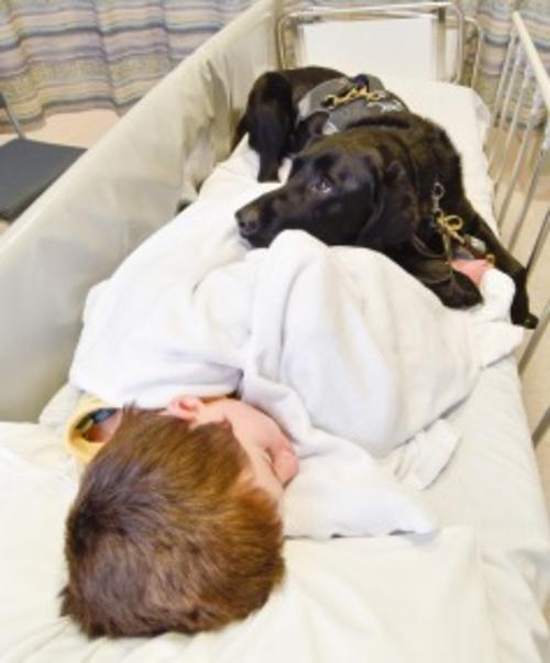 Tan importante es el vínculo que el niño tiene con Mahe, que le fue permitido estar junto a él en el hospital. (Foto: Stuff)