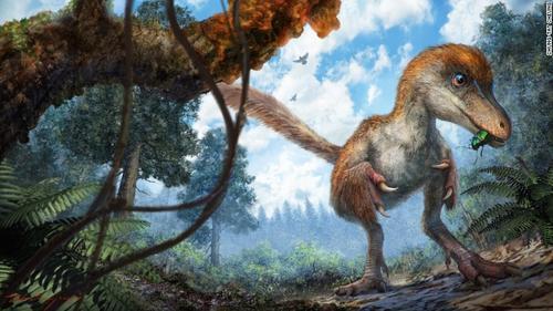 Así lucia la cola de dinosaurio. (Foto: CNN)