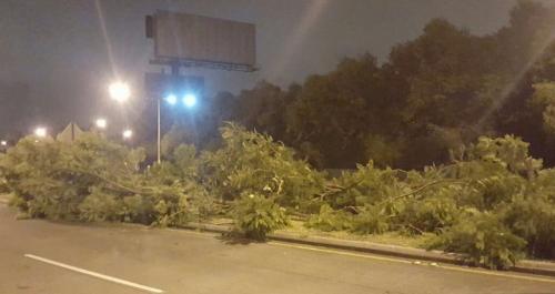 Así quedaron las ramas de los árboles en el sector. (Foto: Jesús Alfonso/Soy502)