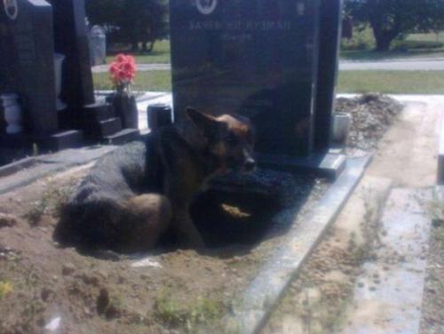 Una perrita cavó un agujero en la tumba de su amo. (Foto: upsocl)