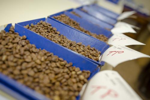 Cientos de muestras de distintos caficultores son recibidas en Anacafé para su control de calidad. (Foto: George Rojas/Soy502)