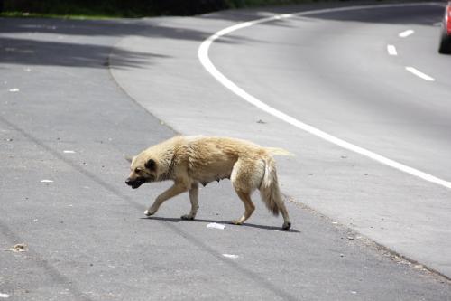 Algunos perros deambulan en el lugar buscando restos de comida. (Foto: Fredy Hernández/Soy502)