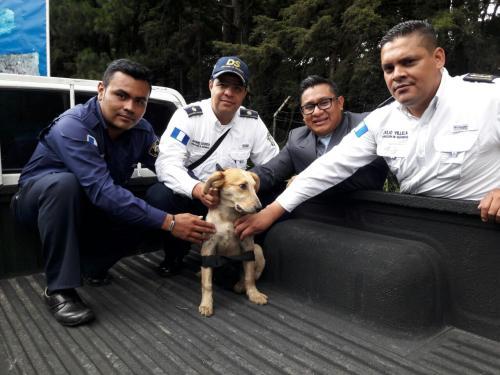 Uno de los perritos que busca comida en ese lugar será la nueva mascota en Mixco. (Foto: Municipalidad de Mixco)