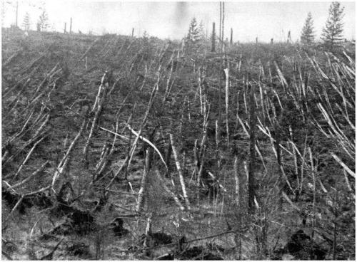 Así quedaron los árboles en Tunguska tras la caída del asteroide. (Foto: Cortesía Edgar Castro Bathen)