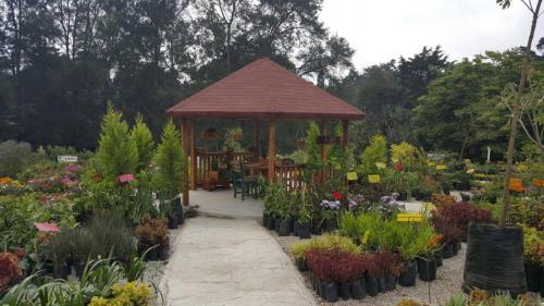 Botanik también está en Carretera a El Salvador. (Foto: Botanik)