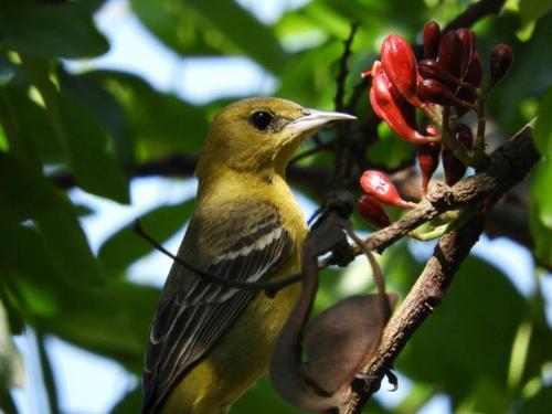 Distintas aves visitan el Vivero Botanik. (Foto: Botanik)