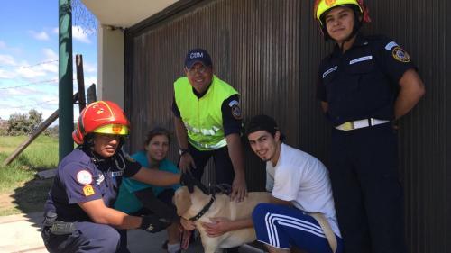 """El perro labrador """"Vodka"""" se reunió con su familia tras pasar varios días desaparecido. (Foto: Bomberos Municipales)"""