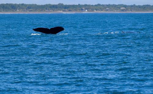 La observación de cetáceos busca establecer una actividad turística y responsable en las costas del Pacífico. (Foto: Paola Foncea/PNUD)