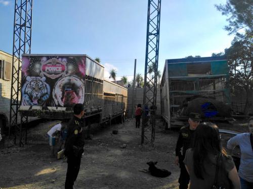 Tras el incidente, las autoridades llegaron al sitio para verificar el estado de los animales enjaulados. (Foto: Conap)