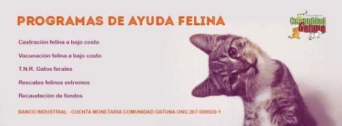 Apoya a Comunidad Gatuna. (Soy502)