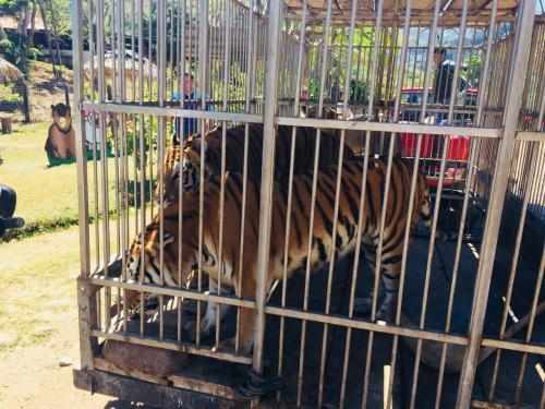 Los animales tendrán un trato digno en su nuevo recinto. (Foto: CONAP)