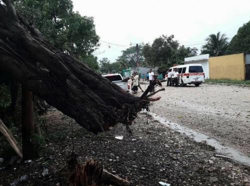 Los fuertes vientos en Petén dejaron daños y árboles caídos. (Foto: captura de Facebook)