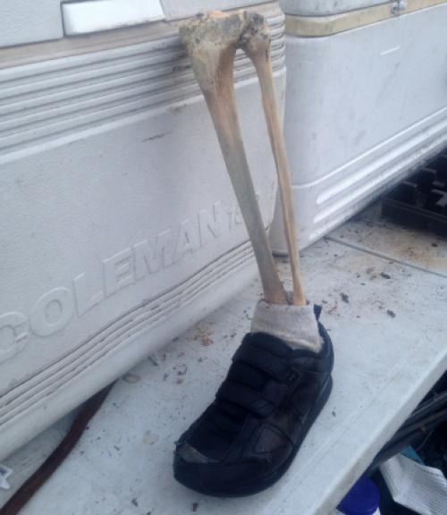 Parte de una pierna izquierda descubierta el año pasado en la costa de Vancouver. (Foto: The NY Time)