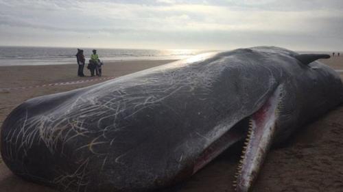 Expertos consideran que los cetáceos fallecieron mientras buscaban alimentarse. (Foto: Daily Mail)