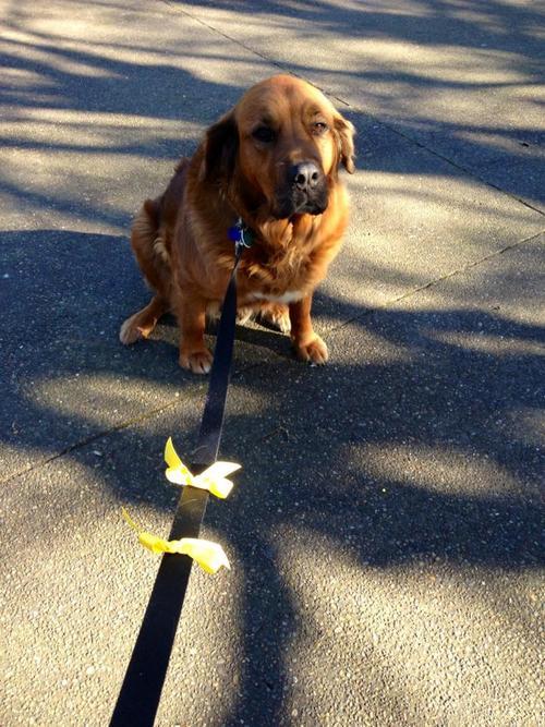 El objetivo de The Yellow Dog Project es hacer consciencia y educar a la gente a que hay perros que requieren un poco más de distancia.