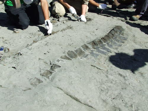 Investigadores chilenos descubrieron unos restos óseos que corresponden a un nuevo tipo de plesiosaurio, un reptil marino de cuello alargado que habitaba en la sureña región del Biobío hace 65 millones de años. (foto: EFE)