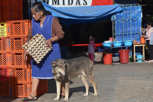 Huachito conmueve día a día a los vecinos y comerciantes establecidos en la avenida Papa Paulo, al noreste de Cochabamba, Bolivia. (Foto: Jorge Abergo/EFE)