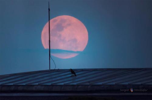 El tamaño de la Luna es producto de un efecto óptico. (Foto: Sergio Montúfar/Cortesía Edgar Castro Bathen).