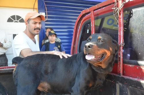 El dueño de Rocky asegura que en la Gobernación departamental no existe ninguna oficina donde se puedan registrar a los perros considerados peligrosos. (Foto: José Sánchez/Nuestro Diario)
