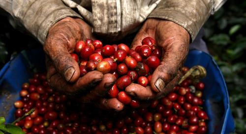 En Colombia, la agricultura representa entre el 14% del PIB y el 40% de las exportaciones, pero recibe menos del 4% de los préstamos.