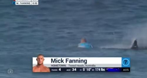 El tiburón se acerca al deportista. (Foto: Tomada de video de YouTube).