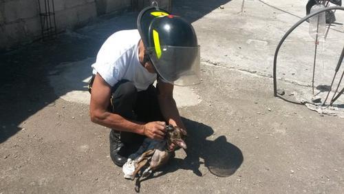 Dos oficiales de los Bomberos Voluntarios intentaron reanimar a dos perros de raza Chihuahua que se encontraban en el interior de la vivienda que se incendió. (Foto: @BVoluntariosGT)