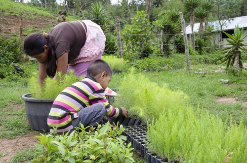 Familias de la Aldea El Duraznal recibieron cientos de árbolitos. (Foto: Eddie Lara/Soy502)