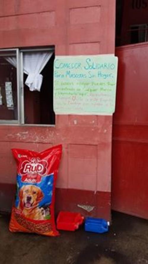 Los Bomberos Voluntarios de Villa Canales fomentan la instalación de comedores para perros sin hogar. (Foto: Bomberos Voluntarios)