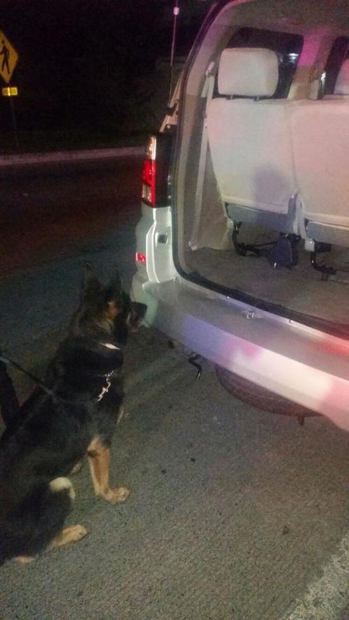 El cargamento fue localizado con la ayuda de un perro entrenado de la PNC. (Foto PNC)