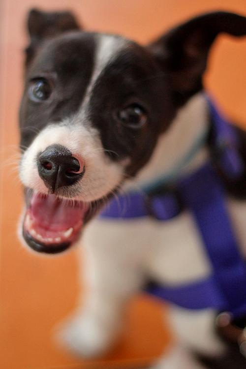 Adoptar, cuidar y esterilizar, es la premisa de las asociaciones protectoras de mascotas.