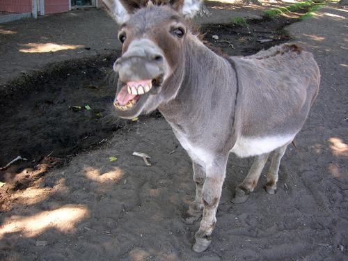 La carne de burro se come en China como aperitivo, en pinchitos, y no como una especialidad culinaria. En cambio, en las mesas chinas no se consume carne de zorro. (symboljewellery.com)