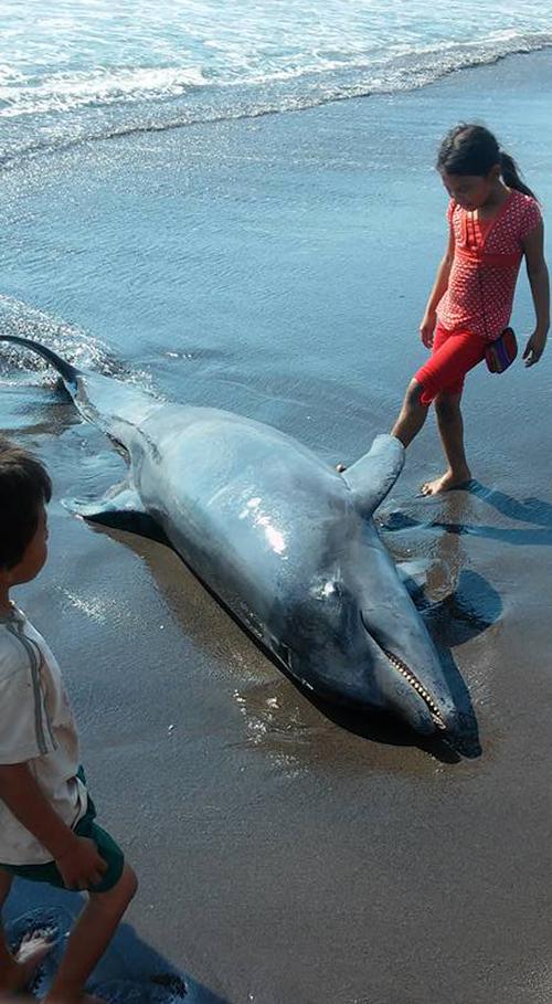 Los niños fueron los que más interactuaron con el animal muerto.  (Foto:  Ángel Revolorio/Nuesto Diario)