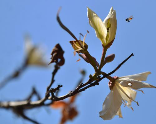 Efímera es la primavera de marzo y abril. (Foto: Wilder López/soy502)