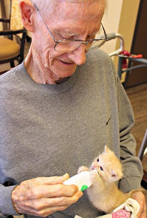 Un residente del asilo alimenta y juega con uno de los gatitos. (Foto: Facebook/ Prima Animal Care)