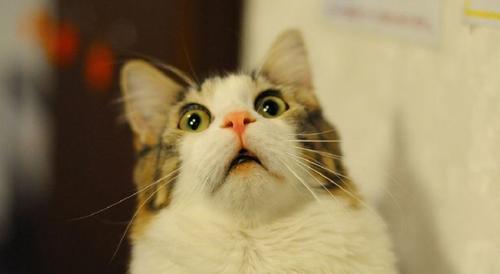 Los gatos activan sus defensas de alarma con esta acción; el impacto podría hacerles daño. (Foto: webadictos.com)