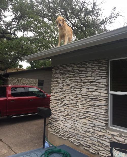 Muchos se preguntan por qué un perrito está en el techo de una casa. (Foto: redes sociales)
