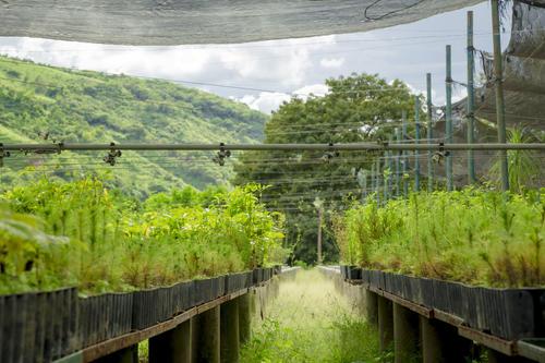 El programa de reforestación de San Miguel produce 1.3 millones de plantas al año. (Foto: George Rojas/Soy502)