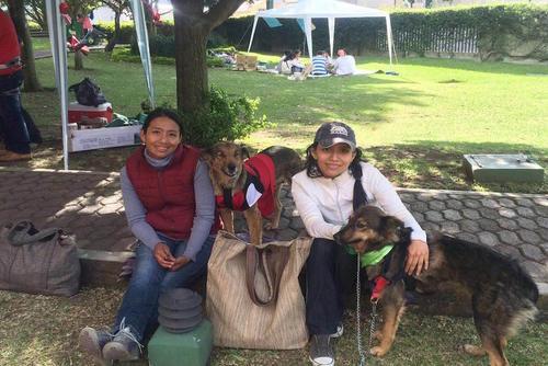 Los dueños de las mascotas han encontrado una buena opción donde sus perros pueden convivir y corren con mucha libertad. (Foto: Museo Miraflores)