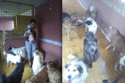 Conoce a los perritos que han encontrado una segunda oportunidad en el albergue de Ingrid García. (Foto: Ingrid García)