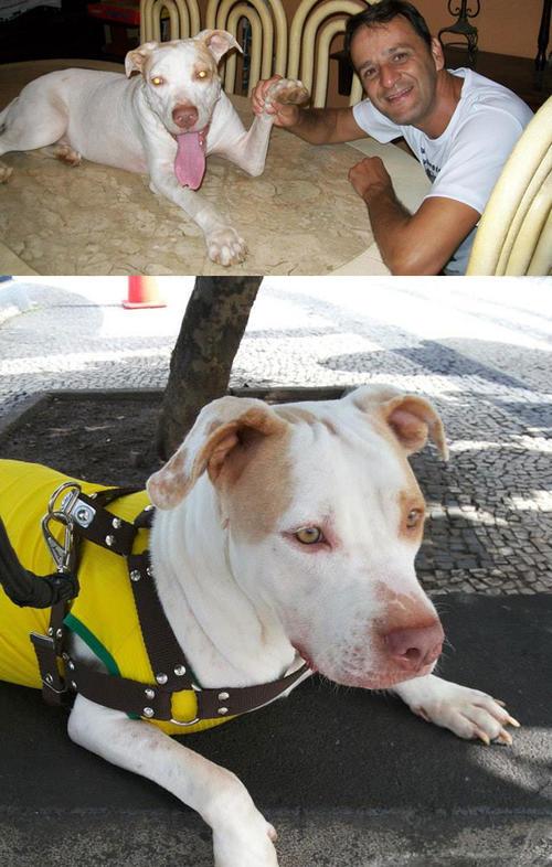 Se desconoce la causa de las heridas de Davi, pero gracias a la ayuda de Wilson el perro ha salido adelante. (Foro: Facebook)