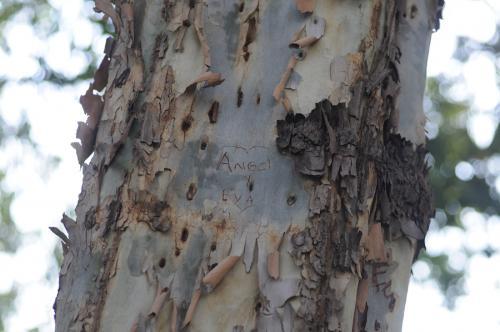 Las parejas dejan su nombre grabado en los árboles. (Foto: Esteban Biba/Archivo Soy502)