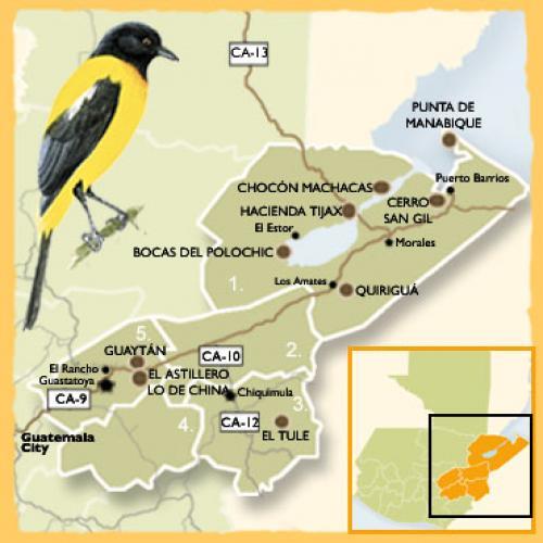 (Foto: Observación de Aves en Guatemala)