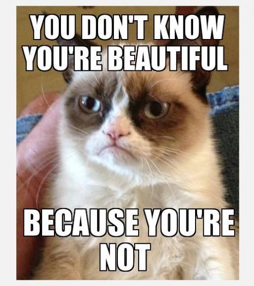 Los memes de Grumpy Cat invaden las redes sociales.