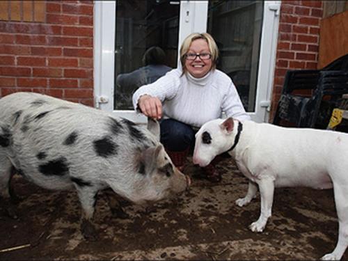 Es ideal si el perrito y el mini pig se conocen desde cachorros para ser buenos amigos. (Foto: queromeuporco.blogspot.com)
