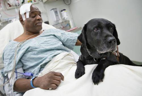 Orlando, el perro guía, sería retirado en poco tiempo. El apoyo de miles de personas ha hecho que su dueño pueda conservarlo.