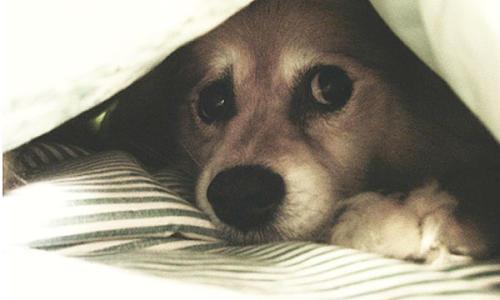El sonido afecta a las mascotas en el hogar durante la celebración.  (Foto:  avisos.com)