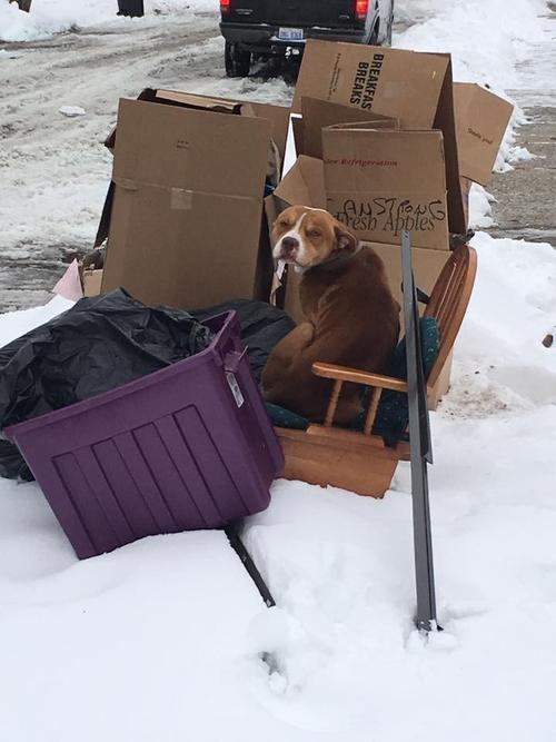 Este es el estado en el que se encontraba este perrito. (Foto: Terry Loby)