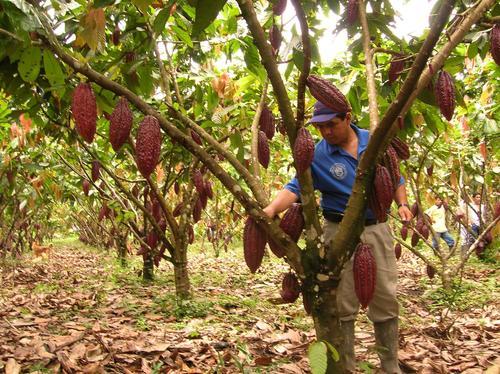 En Perú, la agricultura aporta el 6,4% del PIB y el 7% de las exportaciones, pero recibe tan sólo el 3% de los préstamos.
